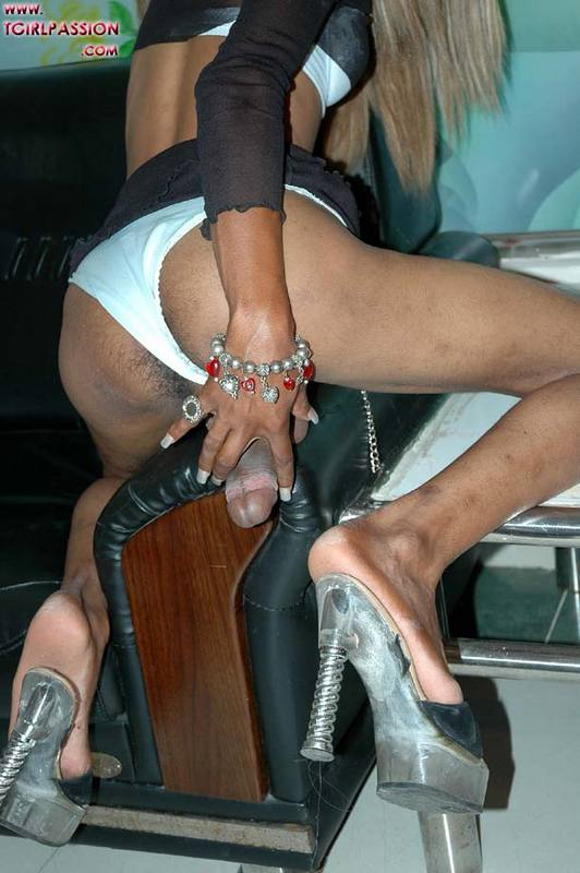 dominican shemale photo galleries -